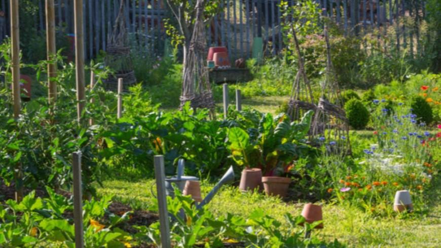Un nouveau jardin partagé à la Croix-Rousse (vidéo)
