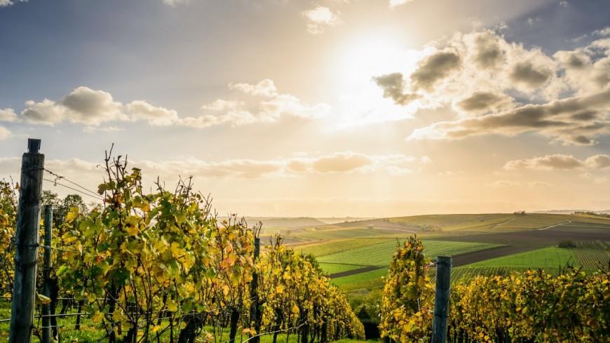 Le cinéma s'invite dans les vignes de la Vallée du Rhône !